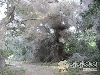 在国外一个古老森林里有人发现的一幕。。。。。。。。