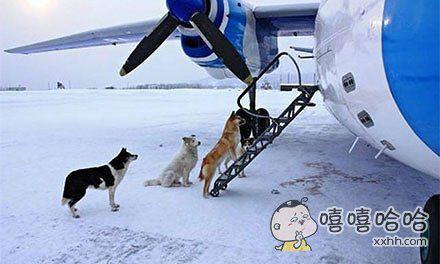 别送了,朕要登机了!