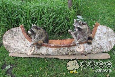 两只干脆面在湖边生活很久了,看到人们在划船他们便在岸边的一艘废旧的小船上模仿了起来。。。