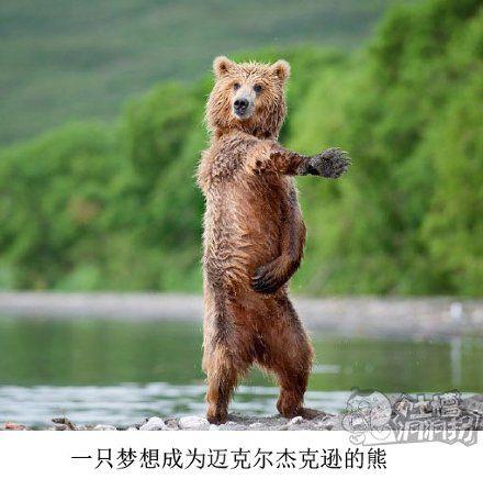 熊:这里交给我!你们快走!!