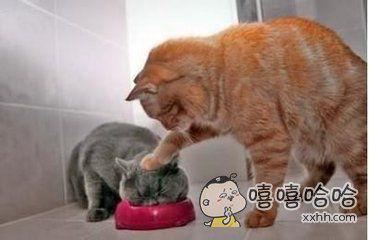 我让你吃个够
