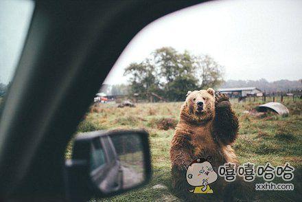 去华盛顿的奥林匹克国家公园,开车途经一头熊,于是开心的跟熊招了招手,没想到熊也抬起了爪子,太萌了