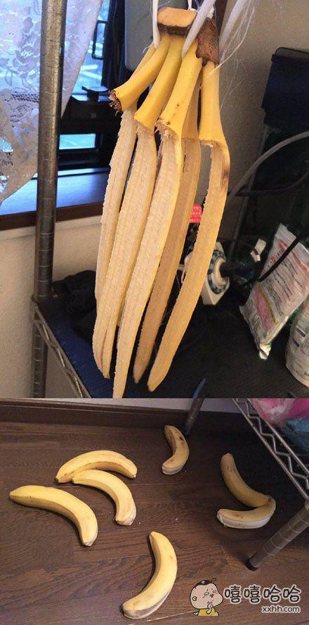 出门吃个饭回来发现家里的一大串香蕉都自杀身亡了!