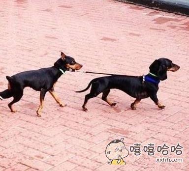 汪星人:别跑!主人说让我溜溜你!