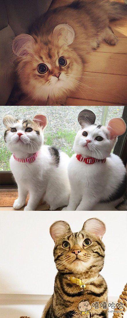各位铲屎官都玩起了大耳猫,哈哈哈哈看起来太可爱啦