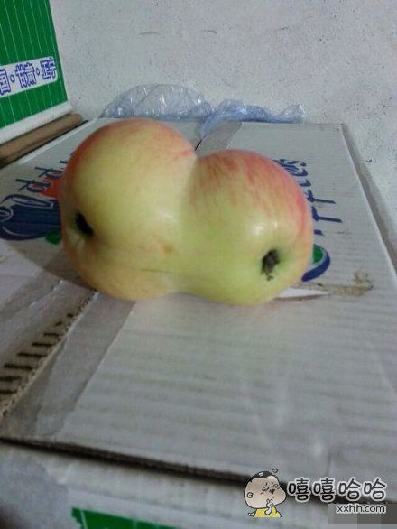 你个苹果长成这相样子,怎么有脸见人。