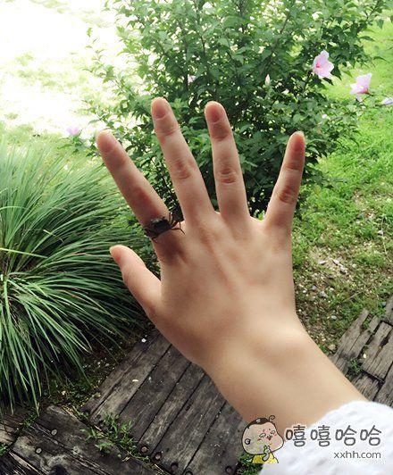 我的戒指简直栩栩如生