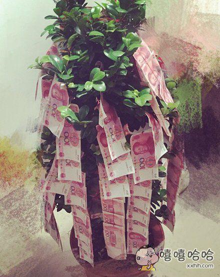 传说中的摇钱树