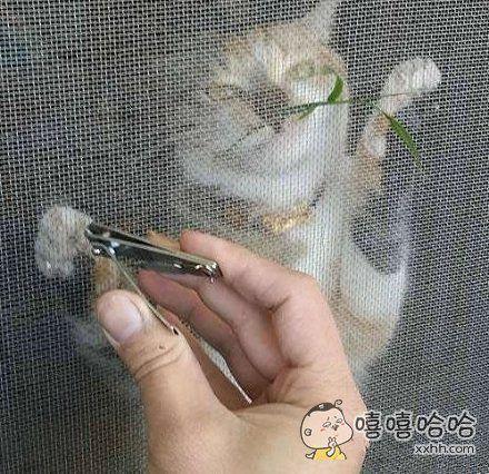 给喵星人剪指甲的好方法