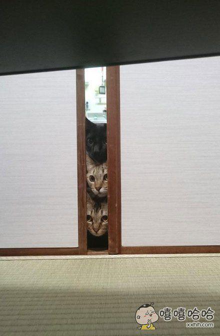 主人用吸尘器搞卫生,家里的三只猫咪当时就懵逼了。。。