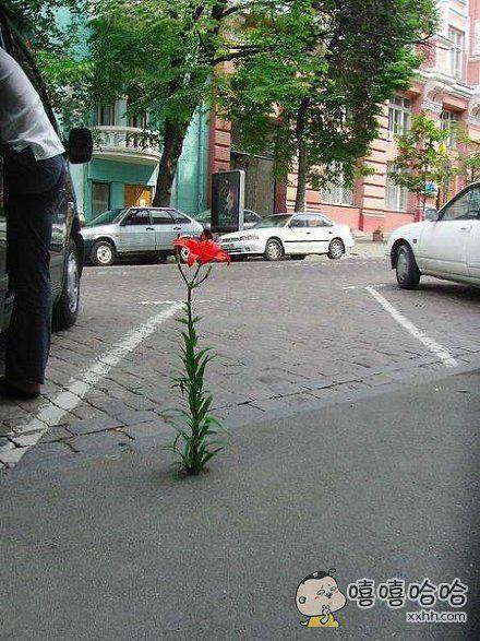 这朵花静静地开在闹市,很坚强。