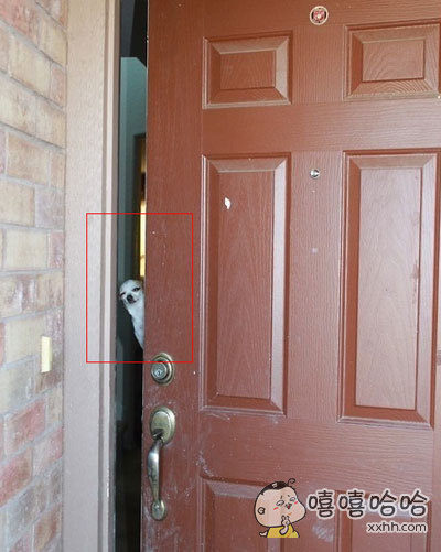 去朋友家串门,来开门迎接居然是。。。。。。。
