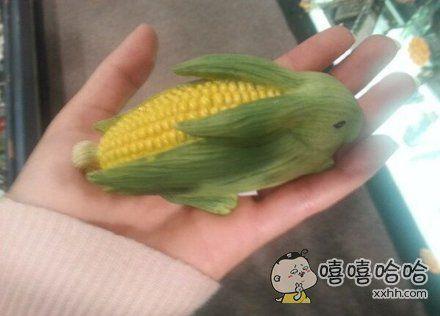 把玉米cos成小兔纸的样子,看起来好萌哇!