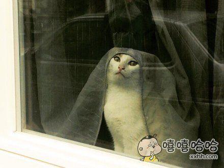 一网友说,下班回家时看到他家喵在窗边看风景赶紧拍了下来。。。宛若一幅古典名画中的女人