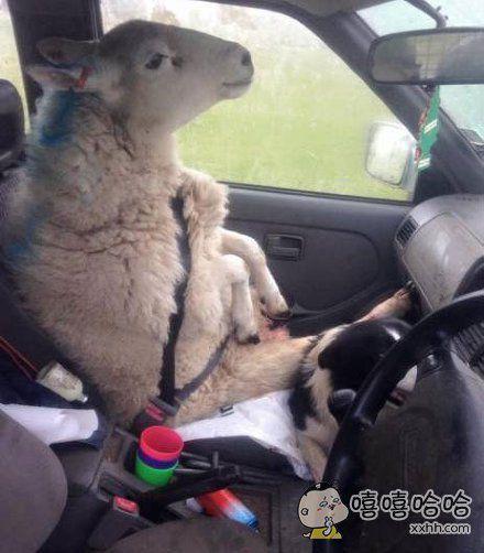 开车出去兜个风。。。