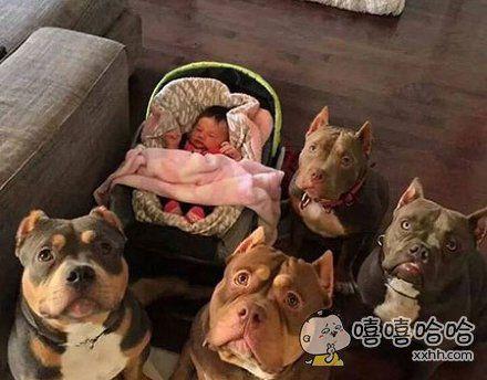 给你们感受下宝宝的保镖团,就是这么霸气