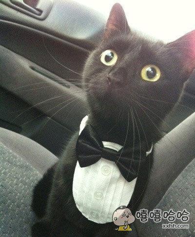 """""""什么?去看兽医?你刚刚不是说要去交响乐团吗?"""""""