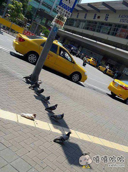 知道今天有多热吗?快热死鸟了。