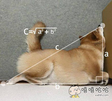 学会了一个新名词——直角睡