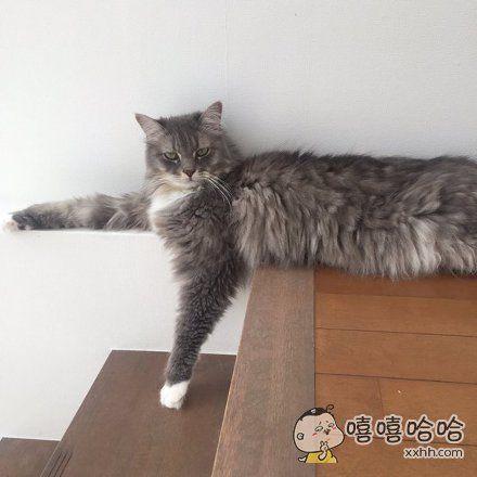 网友家的猫,最近休息时都是这个姿势表情。。