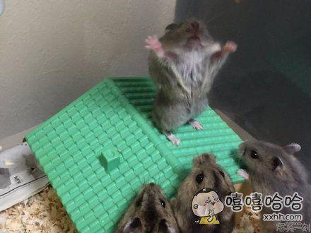 大早上起来,就看见仓鼠们在搞某种神秘的膜拜仪式。。。