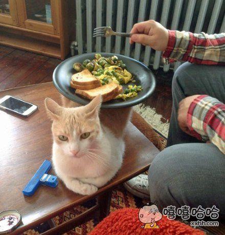 猫咪的正确使用方法,咦有杀气!