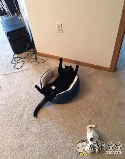 推主给了她的爱猫一些猫草后结果爱猫就这样躺了2个小时。。。喵:铲屎的,朕的白色内内好看不?