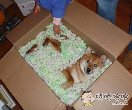 您购买的狗到啦