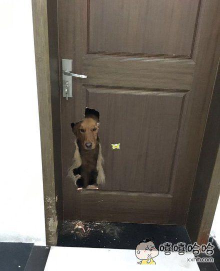 把门咬破了…—对眼懵逼