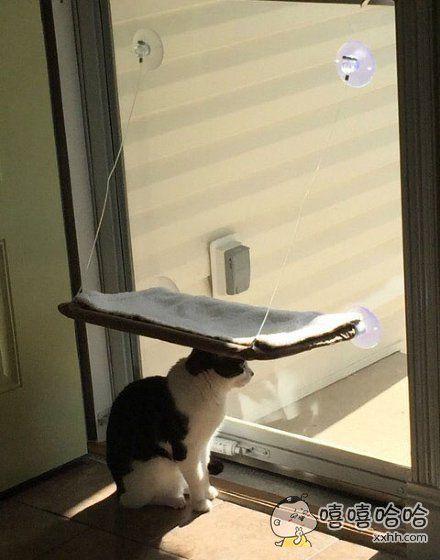 一个网友他为了让他的喵舒服的晒太阳,给它买了个小吊床,结果……