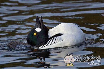 我知道我是一只鸭子,但我现在想做一只兔子