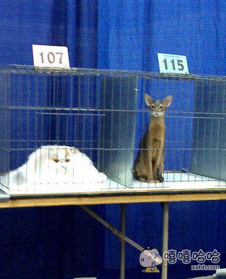 一滩猫,一棵猫
