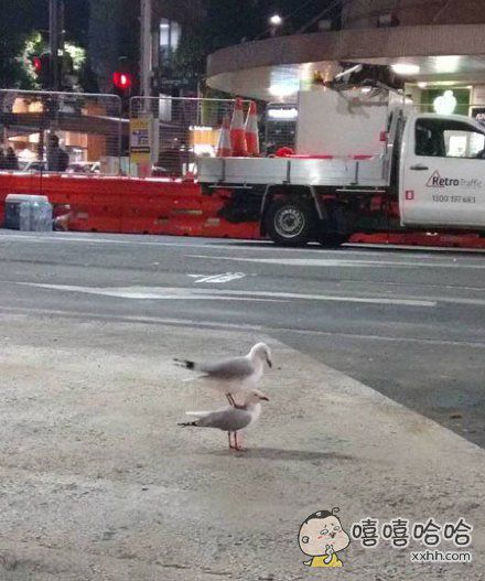 网友dsaddons在街上拍到了这样的一幕,估计下面的那只海鸥内心也满是黑人问号