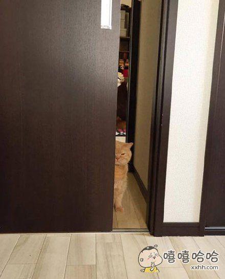 网友说她每次吃饭的时候,家里的猫咪就躲在角落这样看着她。。。。。。