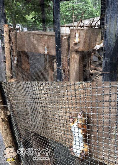 动物公园收到游客反馈说好多松鼠都被卡住了,动物园方表示,它们自己出的来的,只是想找个地方躲起来而已……卡的也太销魂了