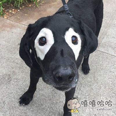 一网友发帖说自家的狗从眼睛那里开始变白了。。。