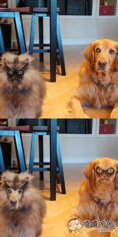 当宠物脸型互换之后