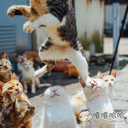 一推友抓拍下的猫咪人梯图。。。每一只表情都是亮点
