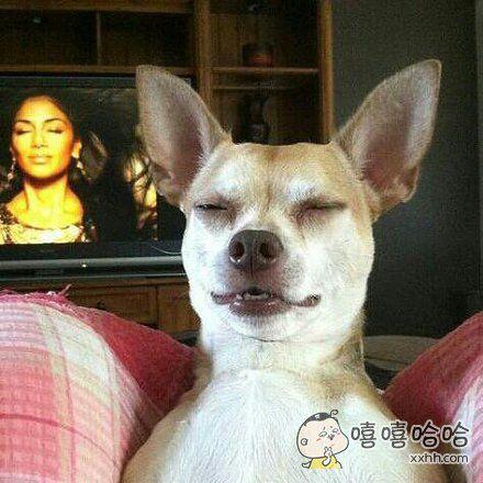 狗狗,你听我说,电视里那人真的不是你妈妈!!
