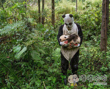 这是我见过最吓人的同类!—————熊猫幼崽