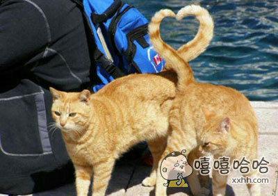 猫都来秀恩爱了