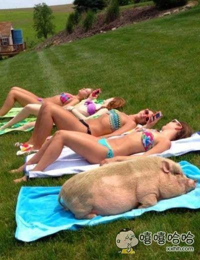 猪的日子也这么好