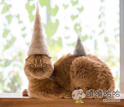 原来猫咪梳下来的毛还能这么玩儿,山顶猫毛帽看起来很棒的样子!