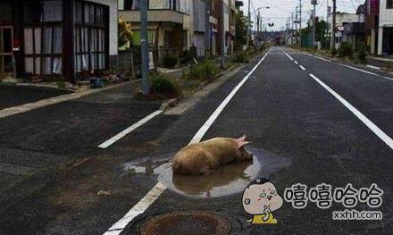 死猪不怕污水脏,伦家说的对不
