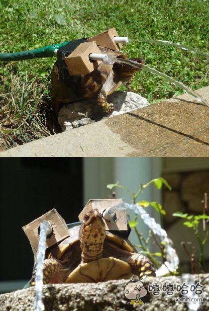 DIY版水战龟