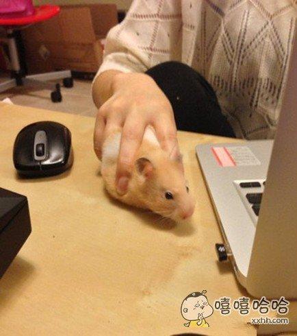 CN……这才叫鼠标!霸气不?