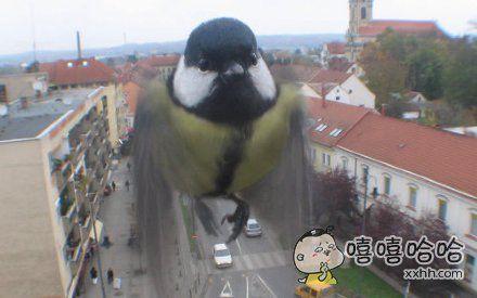 愤怒的小鸟———猪视角