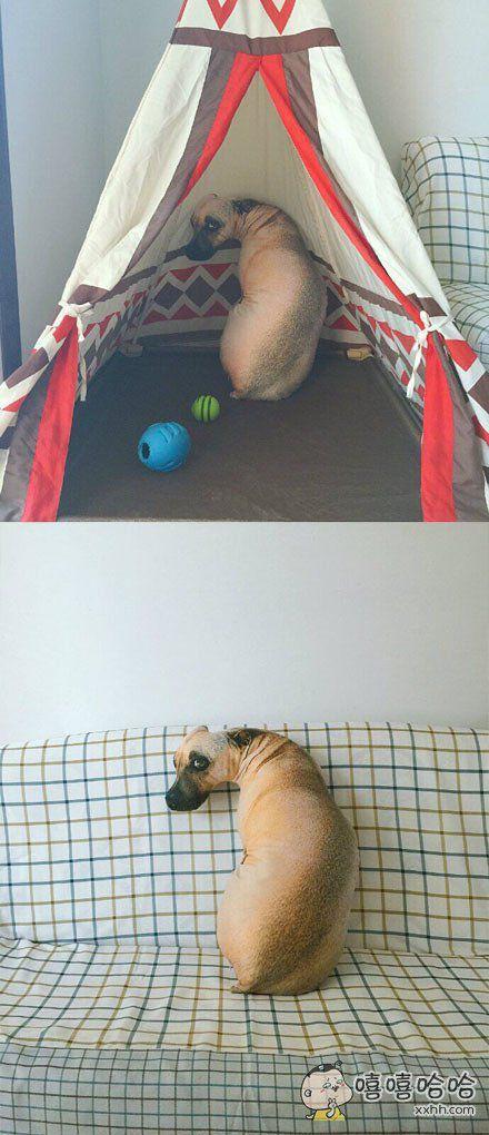 这个是抱枕,不是活的啦