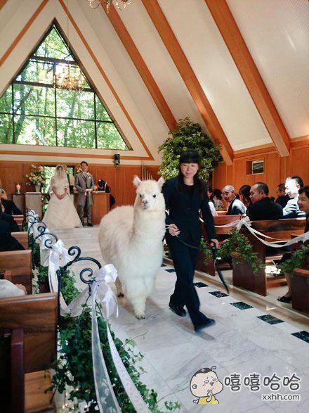 一姐们参加表妹的婚礼,当场就被外形俊朗的伴郎迷倒了