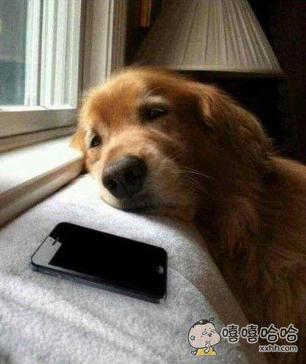 我的情郎怎么还不给我打电话